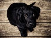 Comment créer une Page Facebook pour son animal