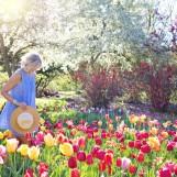 Jardinage et Internet: jardinage en ligne avec les médias sociaux